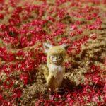映画『劇場版ごん- GON, THE LITTLE FOX -』公開記念!制作の舞台裏に迫るギャラリー展示&連日トークイベント開催決定!!